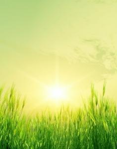 rgn-5330 2540x2000 zoke trava saule sonce