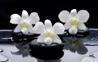 rgn-5332 2540x4000 geles cvety kamni akmenis
