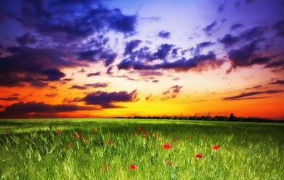 rgn-5336 2540x4000 dangus nebo zole trava pole laukas