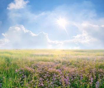 rgn-5339 2540x4000 dangus nebo tuchi debesys geles cvety pole laukas