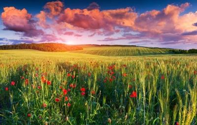 rgn-5360 2540x4000 dangus nebo tuchi debesys pole laukas geles cvety