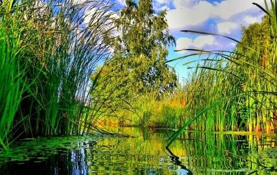 wps-1000-982 tap 2540x4000 medziai derevija vanduo voda zole trava dangus nebo