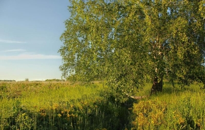 wps-1000-990 tap 2540x4000 dangus nebo medziai derevija zole trava