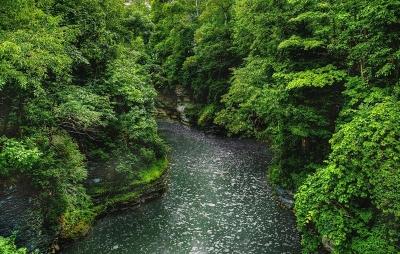 wps-1000-998 tap 2540x4000 medziai derevija vanduo voda reka upe