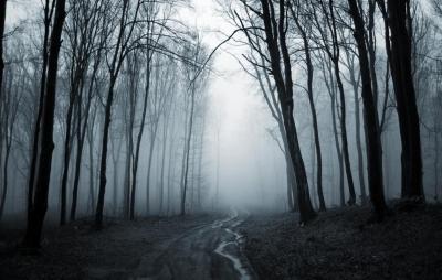 rgn-5489 2540x4000 medziai derevija kelias daroga miskas les