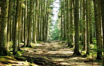 rgn-5493 2540x4000 medziai derevija kelias daroga miskas les