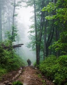 rgn-5495 2540x2000 medziai derevija miskas les kelias daroga