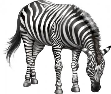 rgn-5498 2540x3000 zebra