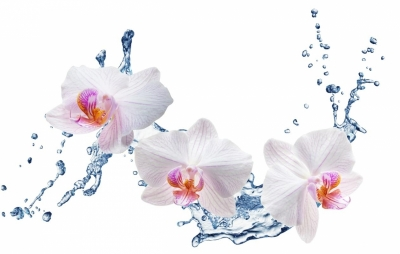 rgn-5503 2540x4000 geles cvety vanduo voda