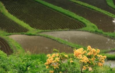wps-1000-2361 tap 2540x4000 geles cvety pole laukas