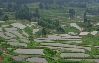wps-1000-2362 tap 2540x4000 pole laukas medziai derevija vanduo voda