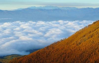 wps-1000-2365 tap 2540x4000 medziai derevija dangus nebo kalnai gory