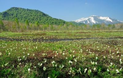 wps-1000-2380 tap 2540x4000 medziai derevija dandus nebo pole laukas kalnai gory cvety geles